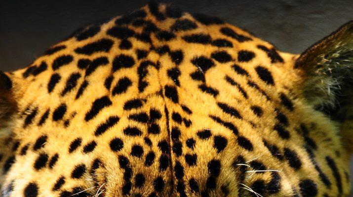 Foto Pantanal: il Paraguay più selvaggio