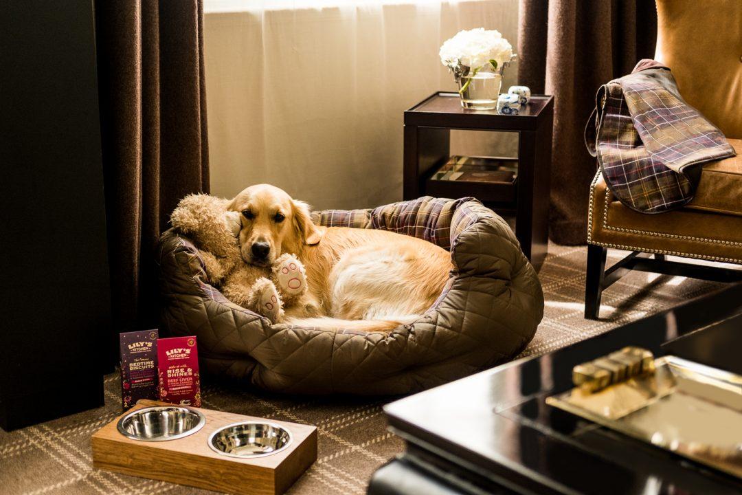 Hotel pet-friendly: lusso a quattro zampe