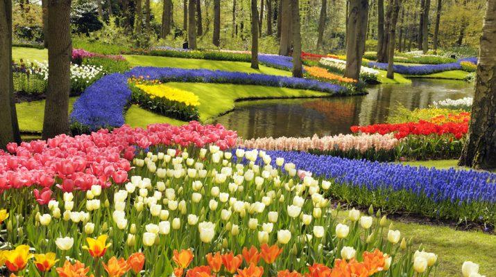 Foto Lo splendido parco di tulipani del Keukenhof