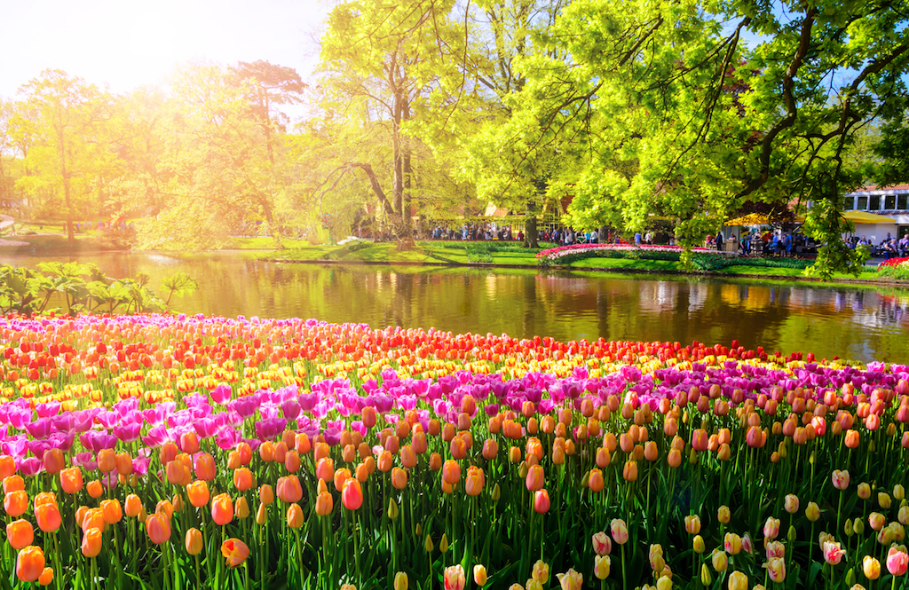 Lo splendido parco di tulipani del Keukenhof