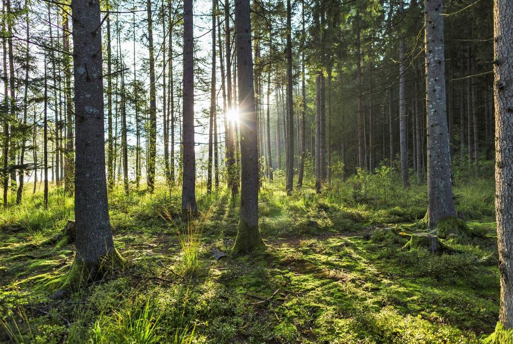Benessere e natura in Austria