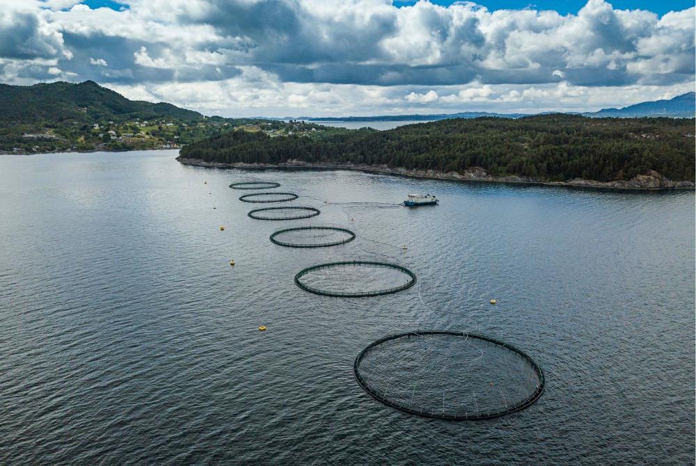 In Norvegia per gustare salmoni e merluzzi