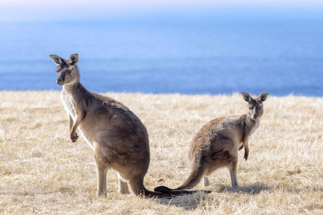 Australia, dove tutto è cominciato