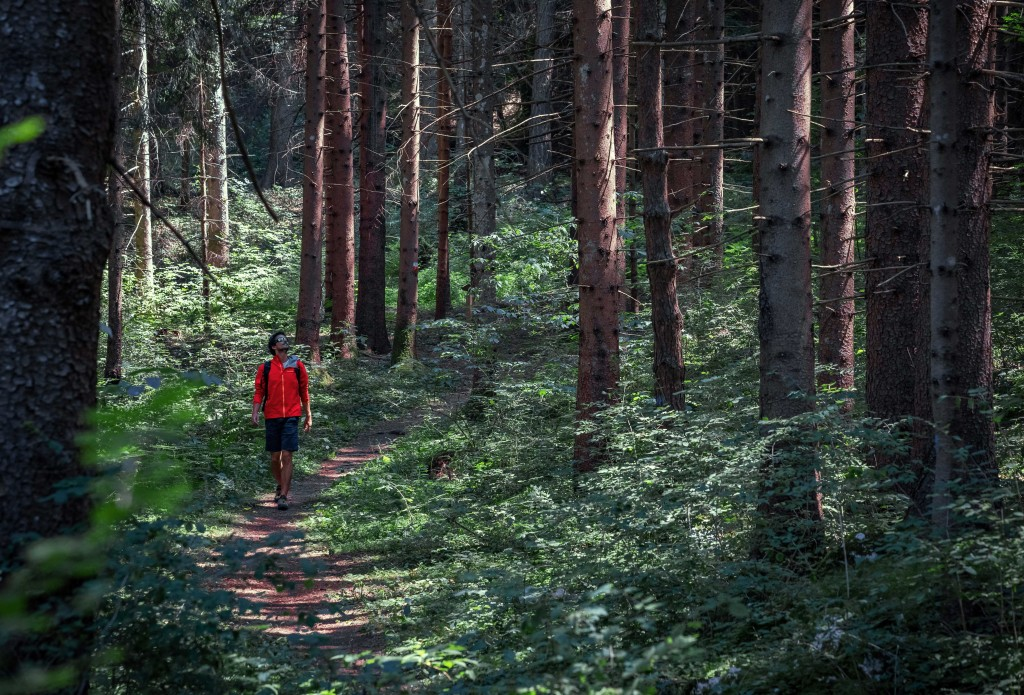 forest-bathing-trentino