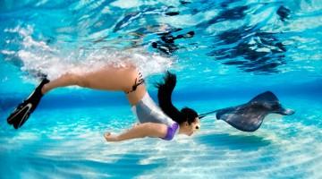 Snorkeling with stingray fish