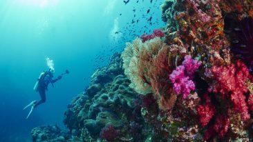 migliori luoghi per immersioni