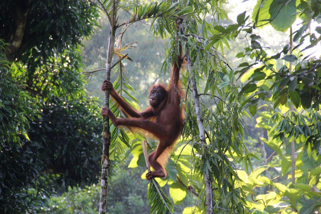 Nel Sabah, alla scoperta del Borneo malese