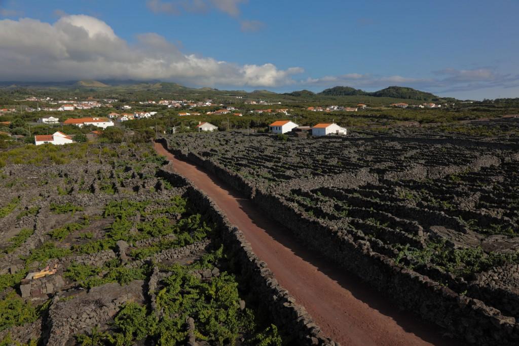 Nel trekking alle isole Azzorre si ammirano i vigneti nell'isola di Pico