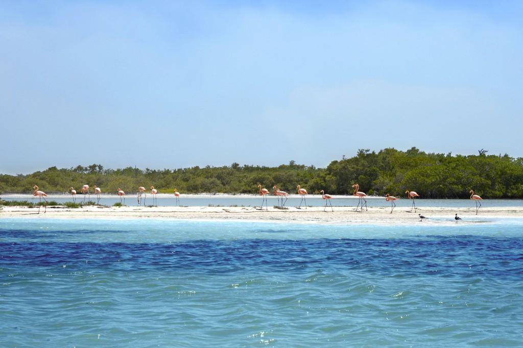Cosa vedere nello Yucatan: riserva della biosfera di Rio Lagartos