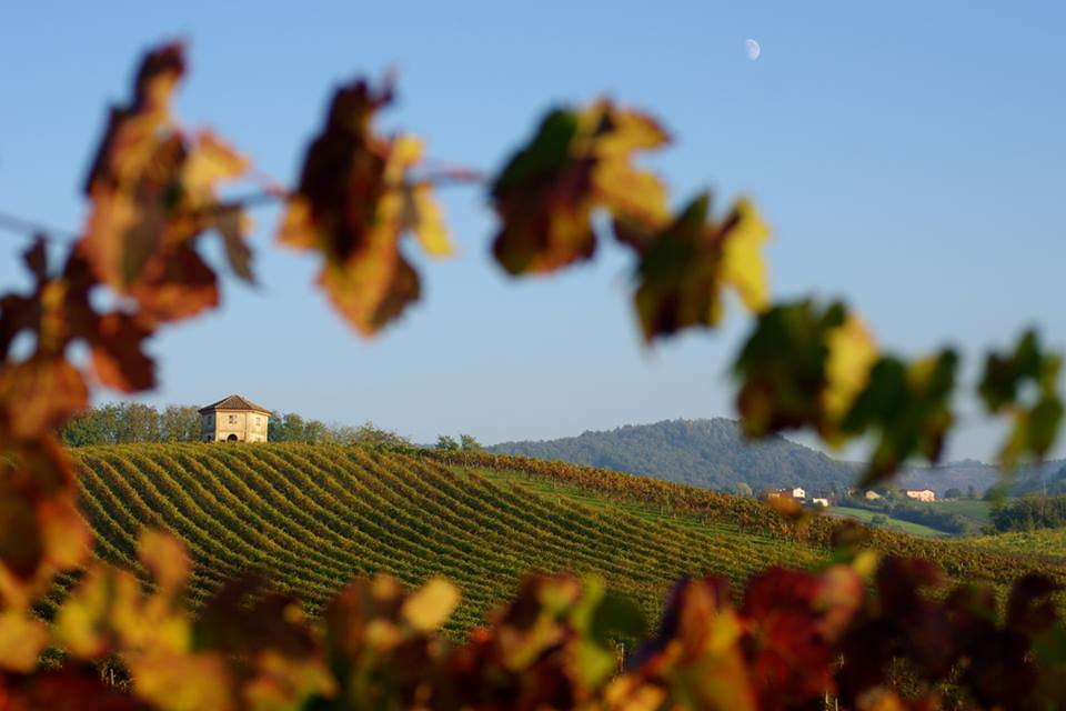 A vendemmiare, dalle Langhe all'Oltrepò Pavese