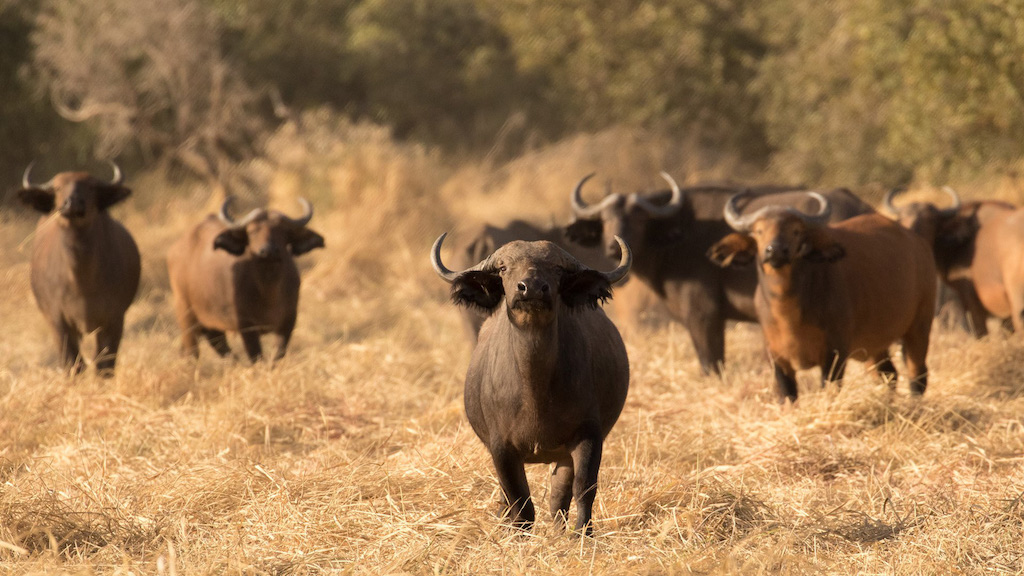 Zakouma National Park - Ciad