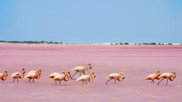cosa vedere nello yucatan: la laguna di Las Coloradas
