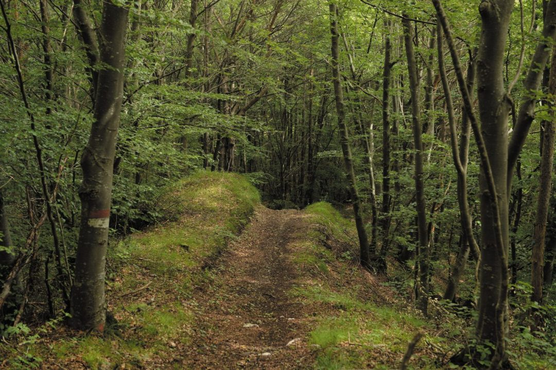 Nei boschi di Fai della Paganella (Trentino)