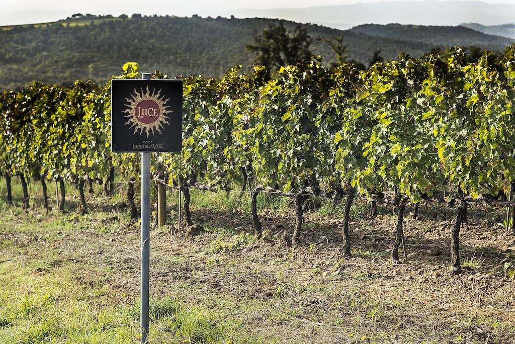 A Montalcino, terroir unico, Tenuta Luce è stata destinata alla produzione di grandi vini utilizzando anche vitigni bordolesi, impiantati sin dagli anni '70.