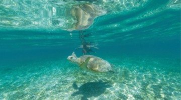 Underwater_Nosy Iranja_GOPR1297