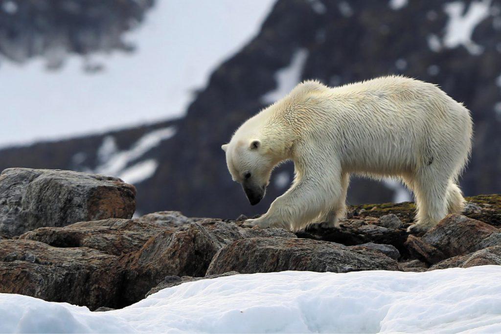 Crociera alle Svalbard
