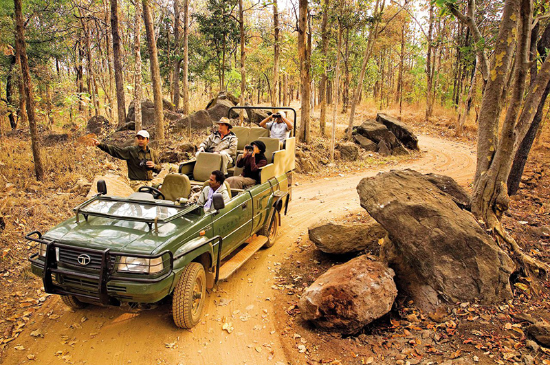 safari per vedere le tigri in India
