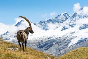 Parchi nazionali d'Italia: 25 mete per un tuffo nella natura