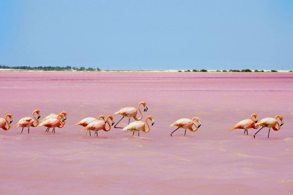 Lo Yucatan è uno dei posti caldi da raggiungere a febbraio: da vedere, la laguna di Las Coloradas, habitat naturale di fenicotteri.