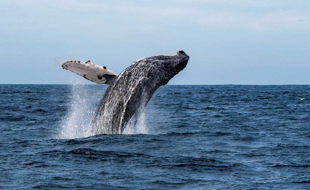 Dove andare in vacanza a febbraio al mare: Messico, Baja California per avvistare le balene