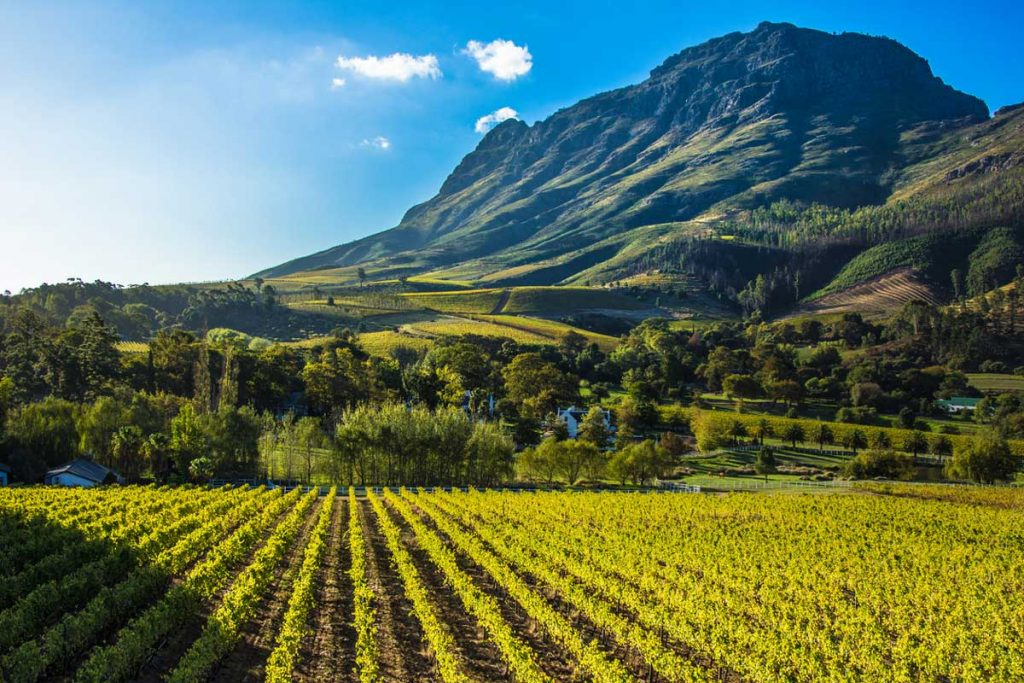 Dove andare in vacanza a febbraio: le cantine del Sudafrica