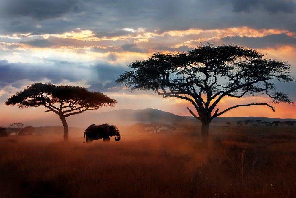 idee per viaggi di nozze: safari in Tanzania