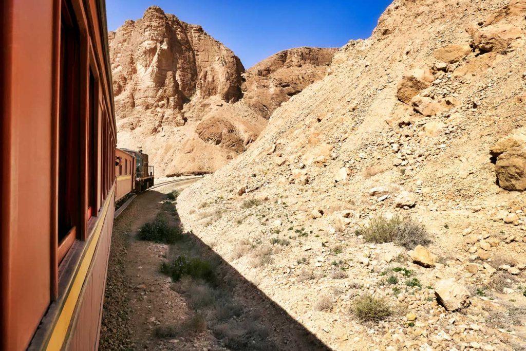 treno Lucertola rossa in Tunisia
