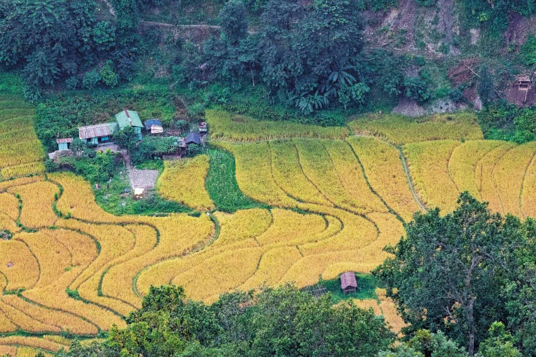 India, tra i paesaggi verdi del Darjeeling e del Sikkim