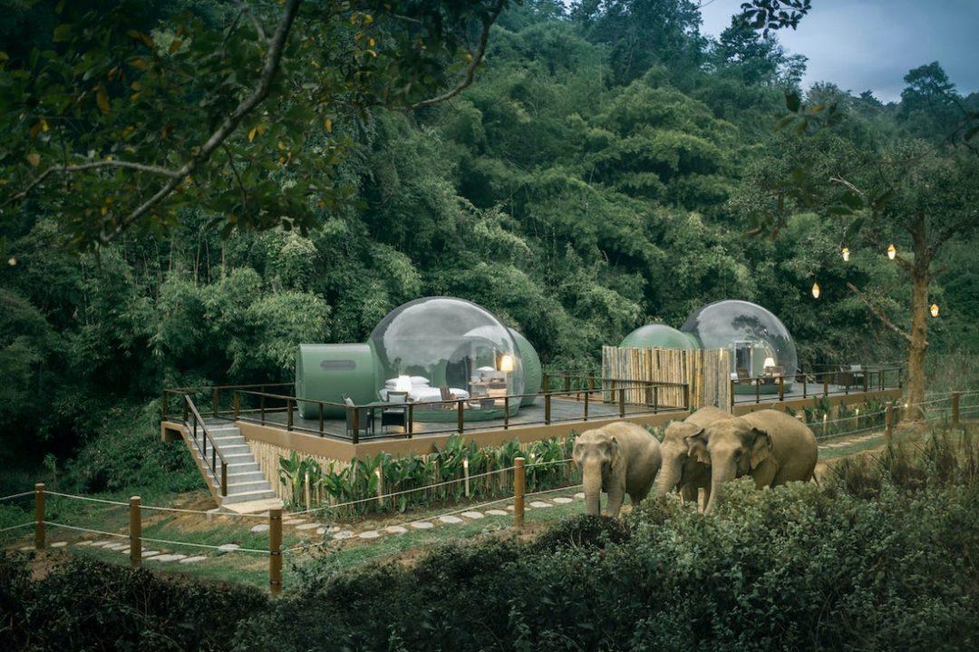 Thailandia: in questo resort si dorme in una bolla tra gli elefanti (senza disturbarli)