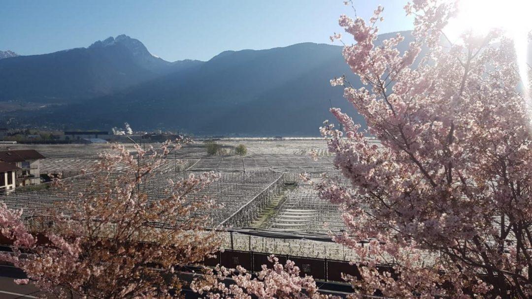"""In Alto Adige i """"fiori di ghiaccio"""" danno spettacolo"""