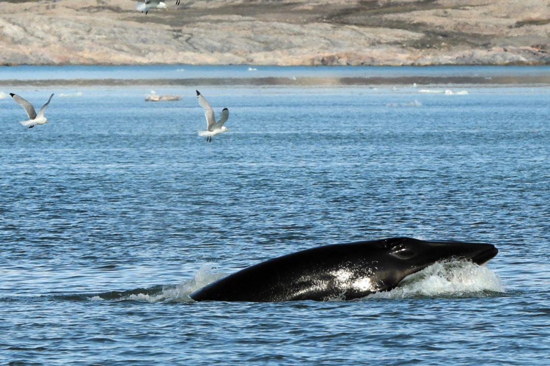 Isole Svalbard in barca a vela: il Grande Nord da sognare