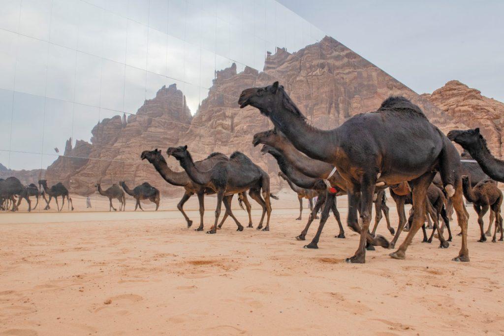 Dromedari si specchiano nella Maraya Concert Hall, Arabia Saudita