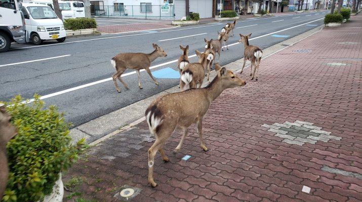 Foto #iorestoacasa: lo stop per il coronavirus ha riportato la natura e gli animali in città