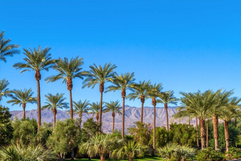Palm Springs, meta dove andare in vacanza ad aprile