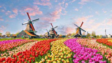 dove andare in vacanza ad aprile: i mulini a vento e i tulipani dello Zaanse Schans in Olanda