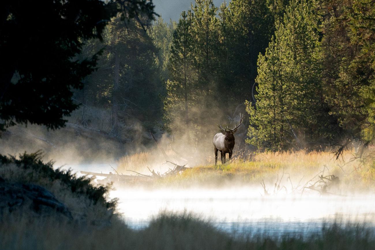 suoni della natura da ascoltare a casa registrati sul sito dei parchi nazionali americani