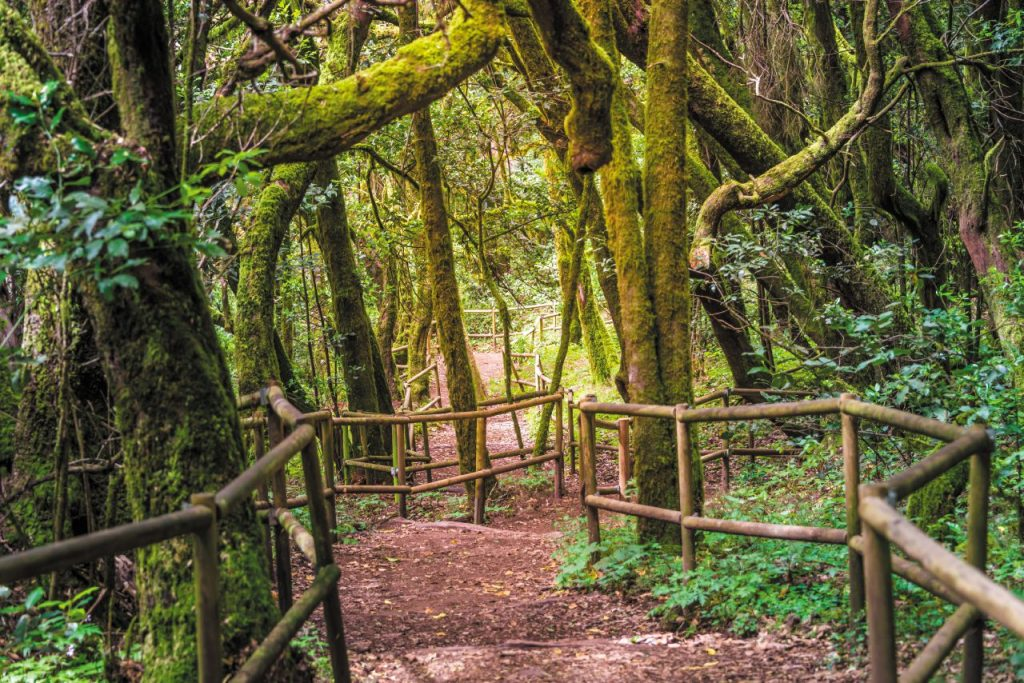 La foresta pluviale di Laguna Grande, nel parco nazionale di Garajonay.