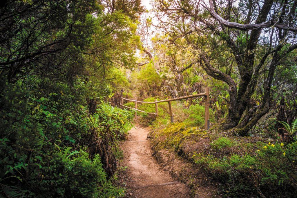 La Gomera, Canarie: trekking el cedro