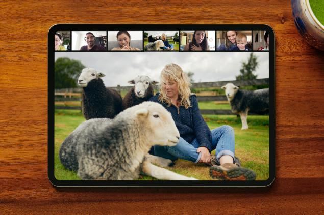 Esperienza Airbnb, meditare con una pecora
