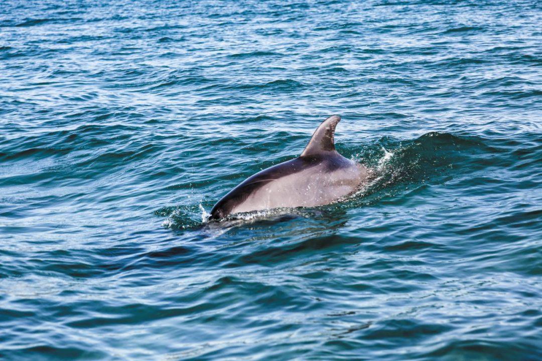 Messico: l'incontro con la natura a Baja California del Sud