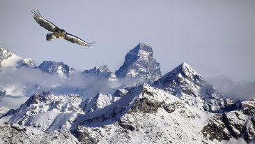 Aigle et gypaète, les maitres du ciel, documentario naturalistico di Anne et Erik Lapied
