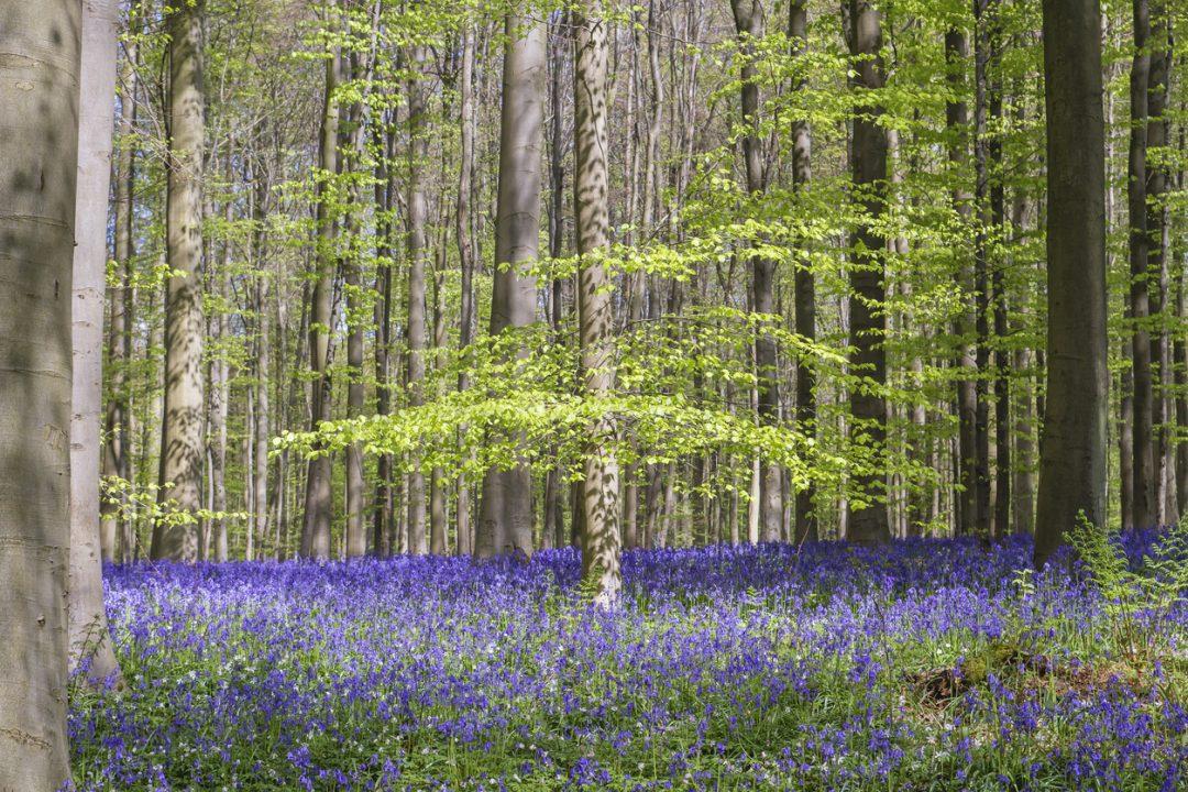 La foresta blu