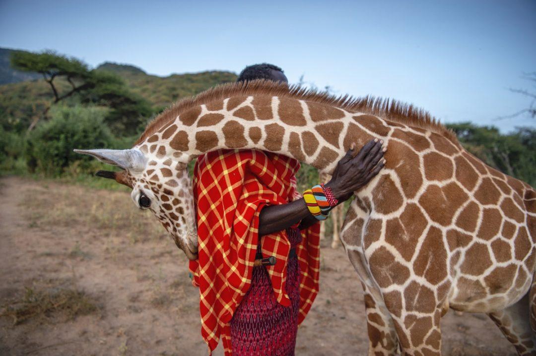 """Le sorprendenti foto vincitrici del """"BigPicture Natural World Photography"""""""