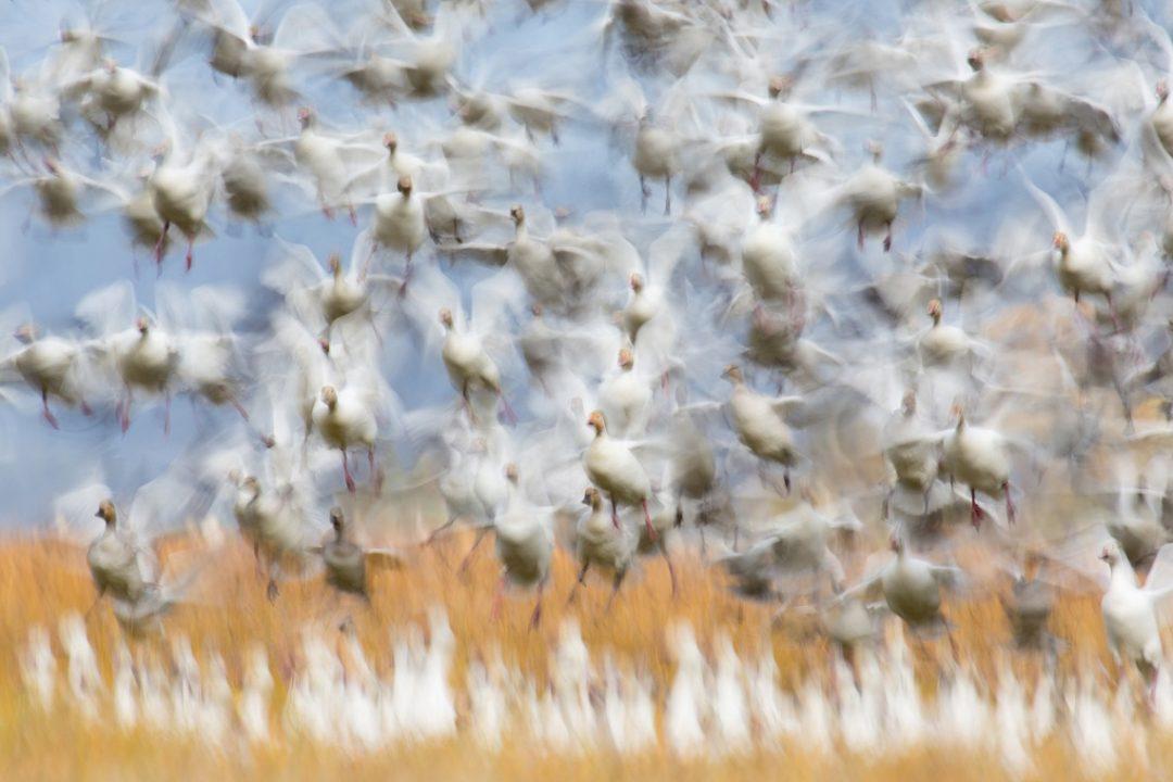 GDT Nature Photographer of the Year: il sogno di una lepre e le altre (bellissime) foto di natura