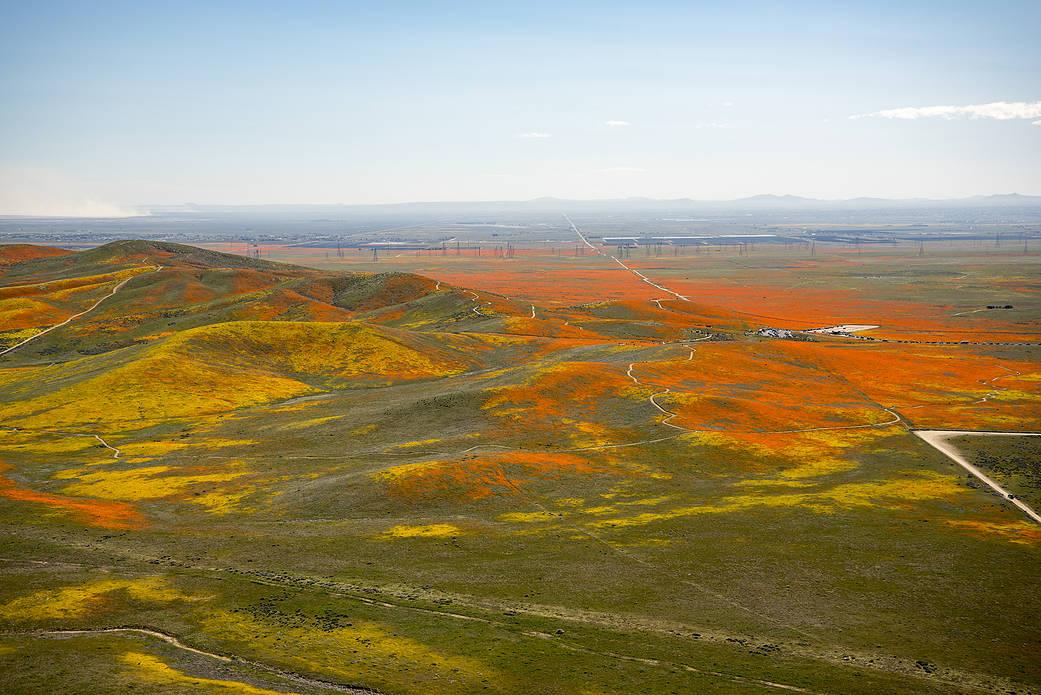 La super fioritura nel deserto della California vista con gli occhi della Nasa: le foto