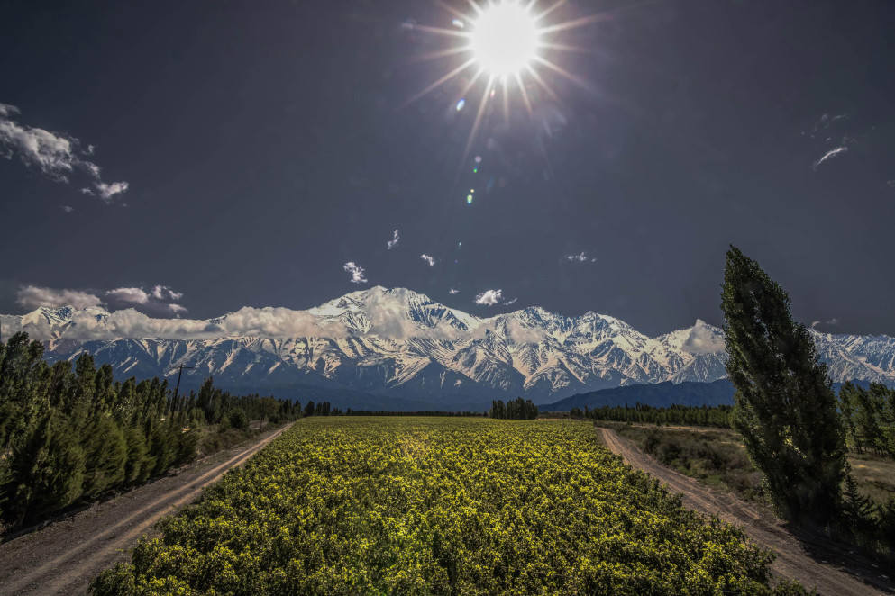 I migliori vigneti del mondo premiati dai World's Best Vineyards Awards 2020