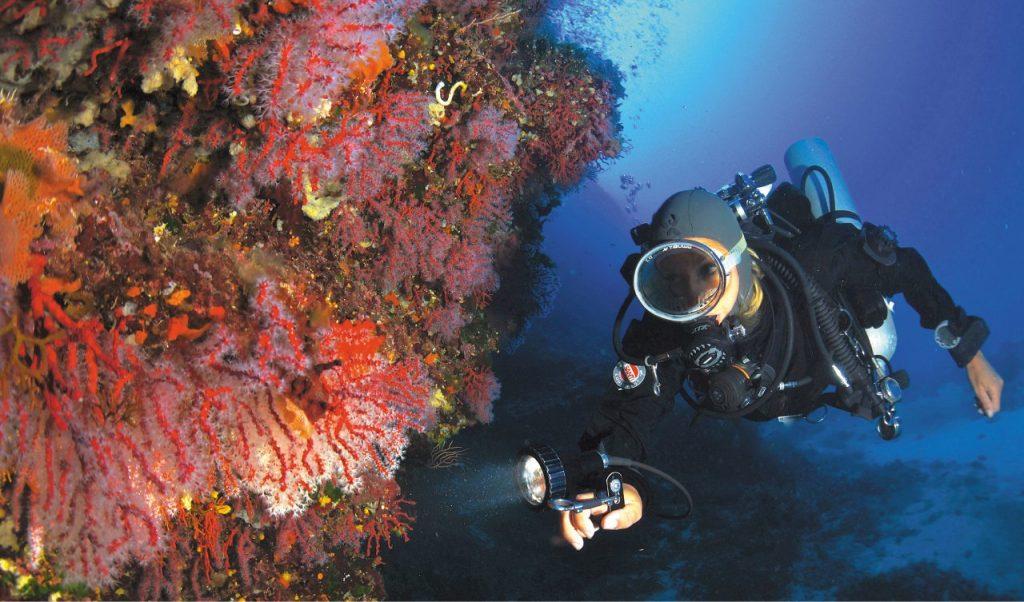 Immersioni con gli istruttori di Argentario Divers