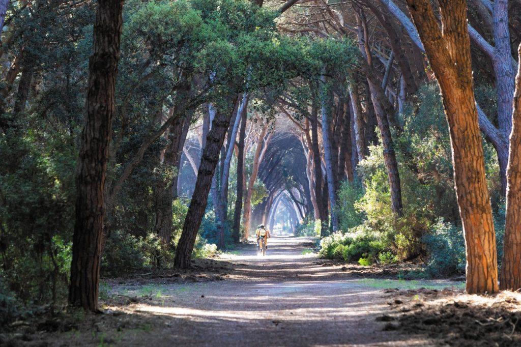 La pineta di Feniglia.