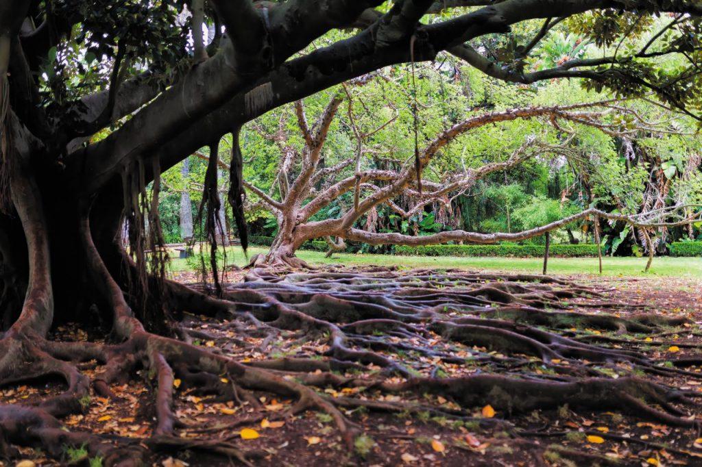 Le meraviglie del Giardino botanico tropicale.