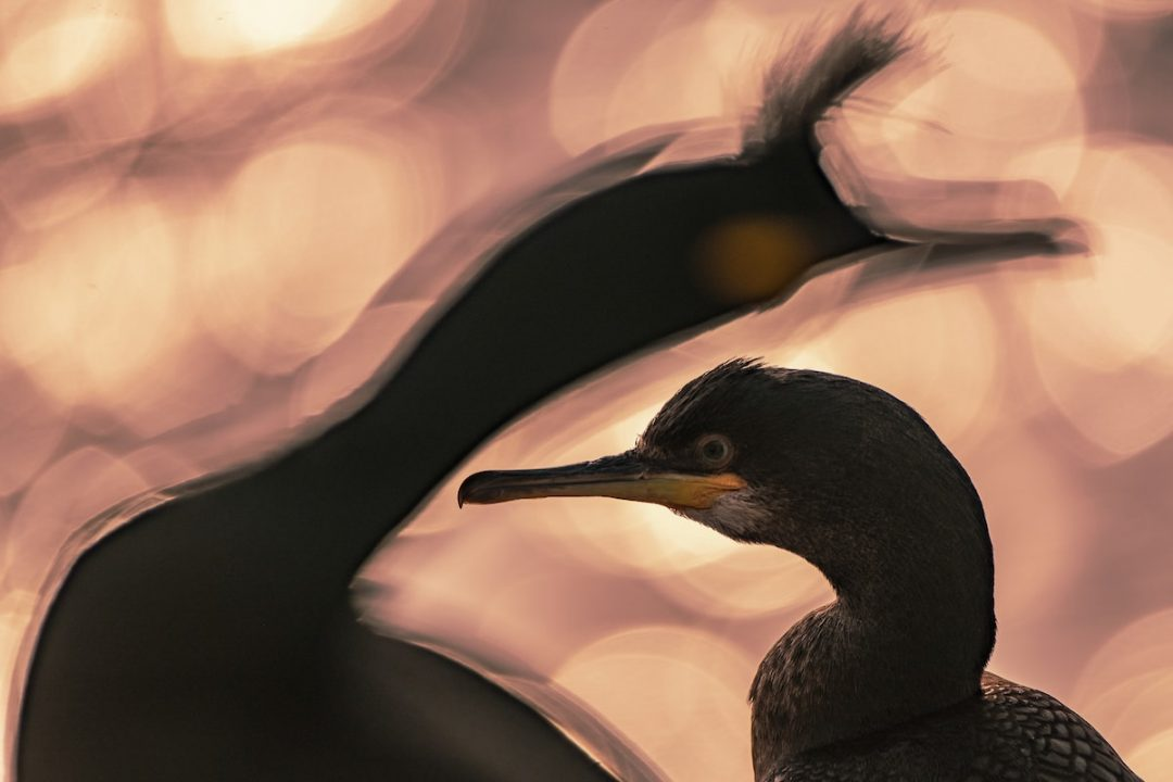 Colti al volo: gli scatti vincenti del Bird Photographer of the Year 2020